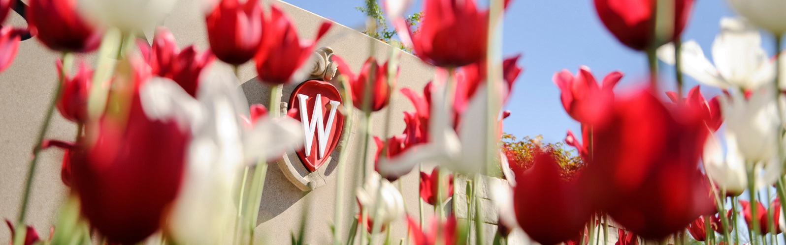 W with tulips