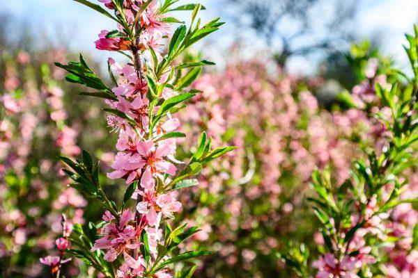 Spring flowers, UW Arboretum
